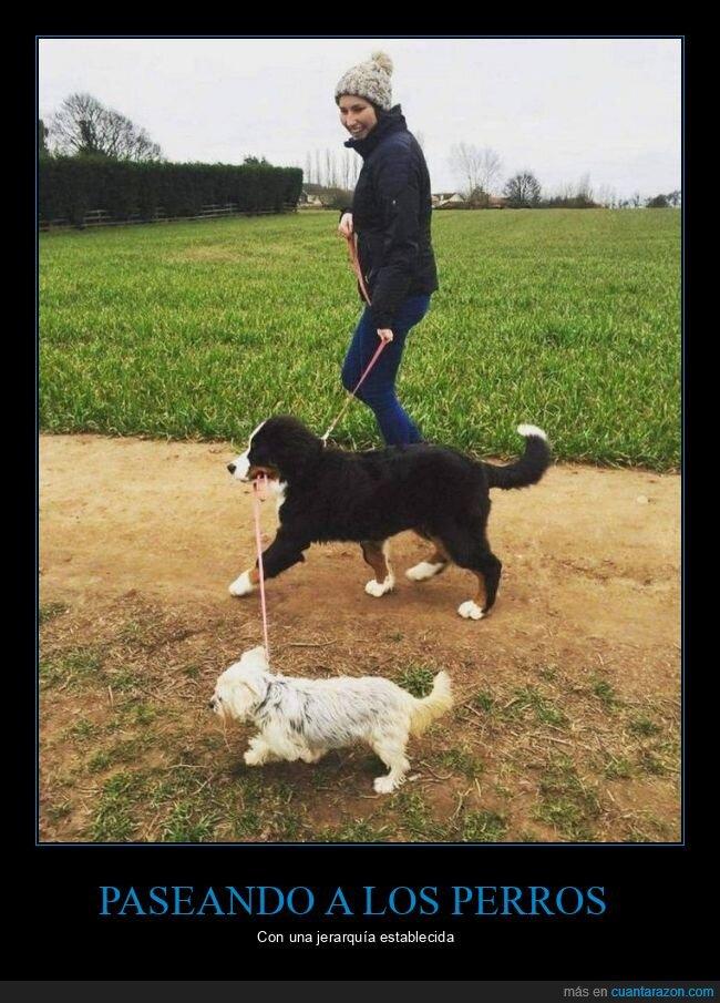 correa,paseando,perros