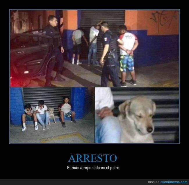 arrepentido,arresto,perro