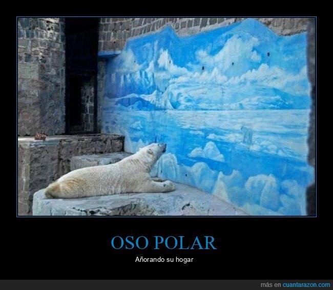 mirando,mural,oso polar