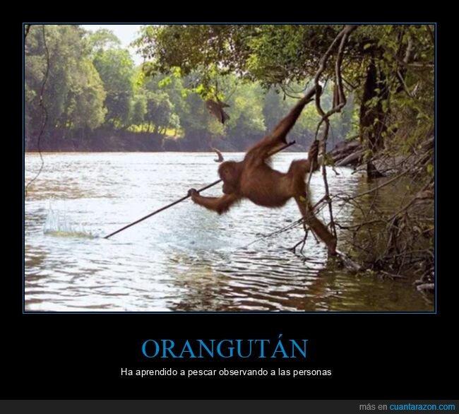 aprender,orangután,pescar