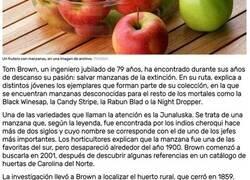 Enlace a Un ingeniero jubilado encuentra su pasión en la agricultura y salva más de 1.200 tipos de manzanas de la extinción