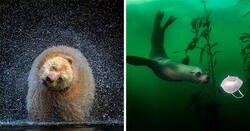 Enlace a El concurso fotográfico BigPicture Natural World 2021 revela las mejores imágenes de la madre naturaleza