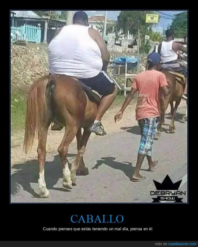 caballo,wtf