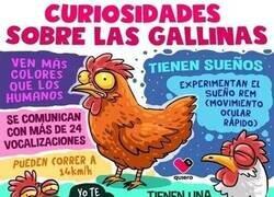 Enlace a Lo que necesitabas saber sobre las gallinas