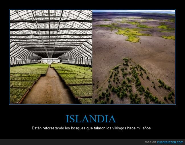bosques,islandia,vikingos