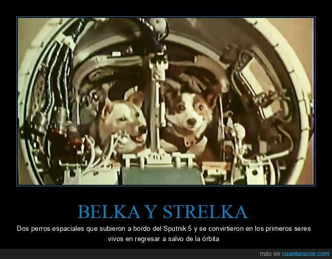 belka y strelka,espacio,perros,sputnik 5