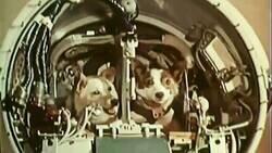 Enlace a Perretes astronautas