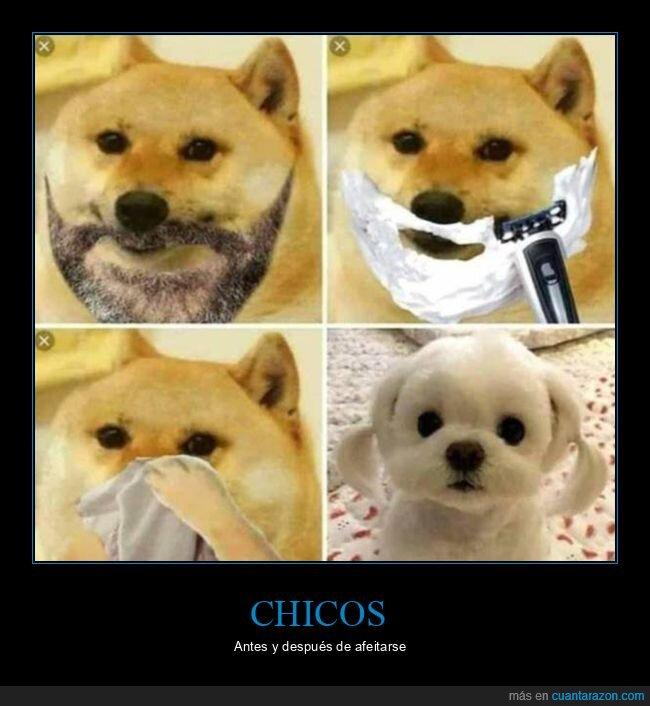 afeitarse,perros