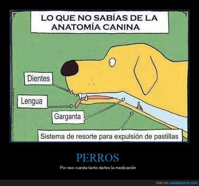 anatomía,pastillas,perros