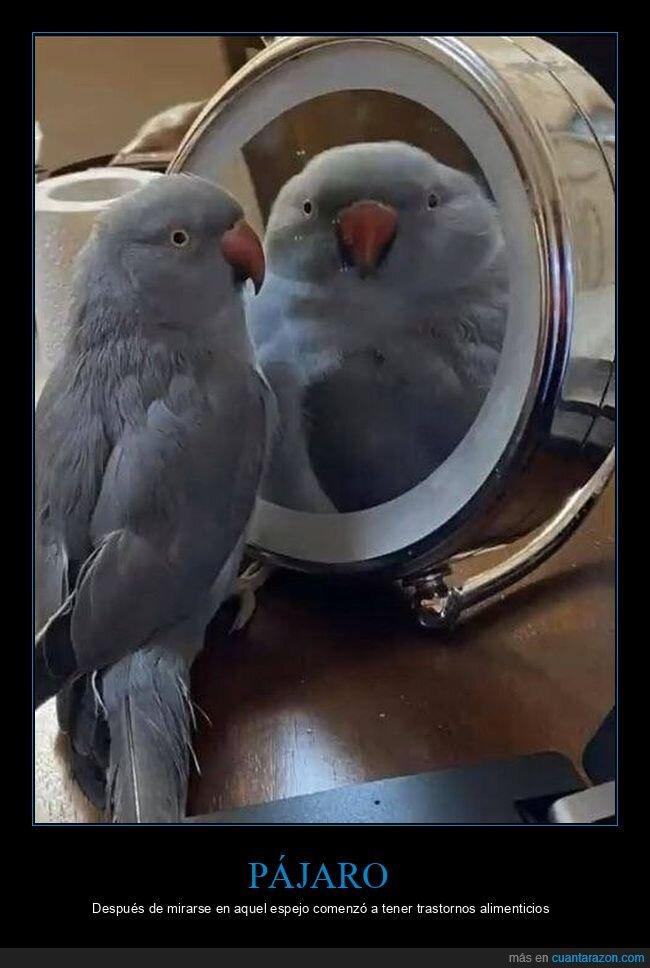 espejo,pájaro,reflejo