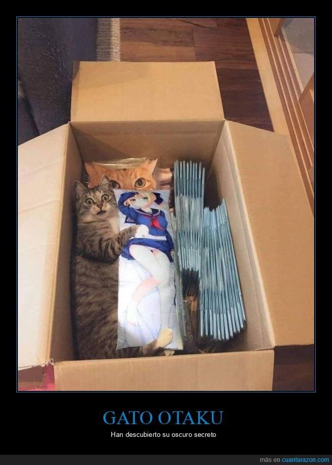 caja,gato,otaku