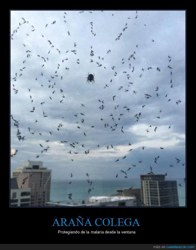 araña,malaria,mosquitos,protegiendo