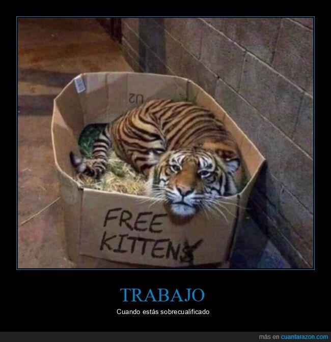 caja,gato,tigre