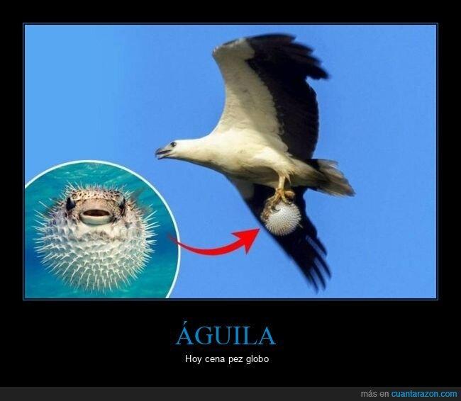 águila,pez globo,wtf