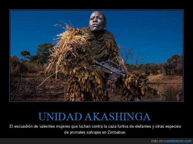 akashinga,caza furtiva,elefantes,escuadrón