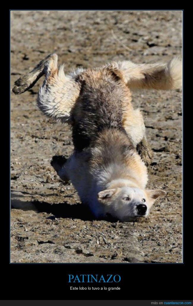 fails,lobo