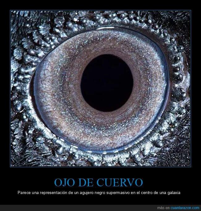 agujero negro,cuervo,ojo