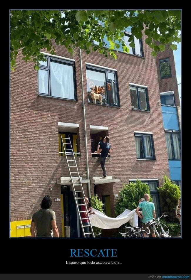 perros,rescate,ventana