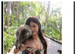 Enlace a Cuidado con los monos