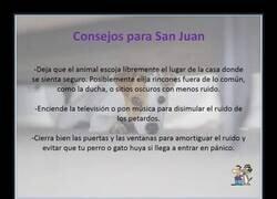 Enlace a Mascotas en la noche de San Juan
