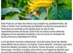 Enlace a Frutas y verduras raras que probablemente no sabías que existían