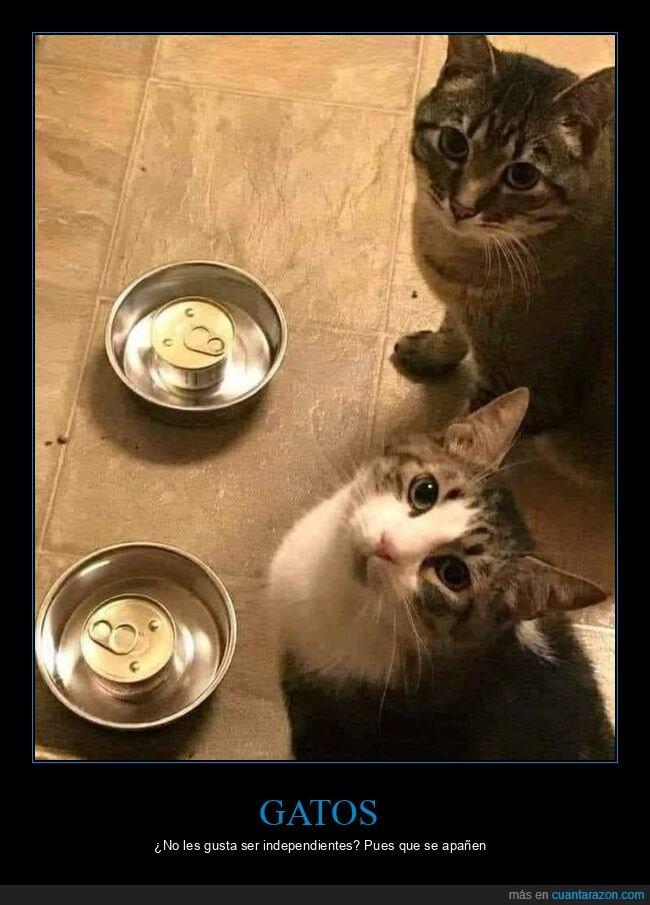 comida,gatos,latas