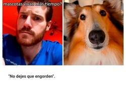 Enlace a Consejos de un veterinario para el cuidado de tu mascota