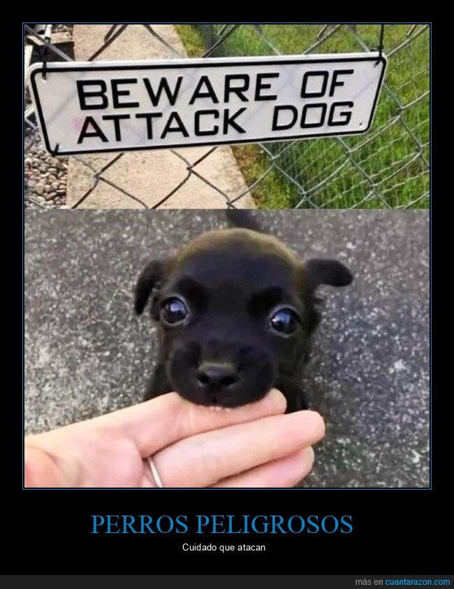 cartel,peligroso,perro