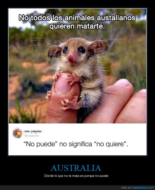 animales,australia,australianos,matar,poder,querer