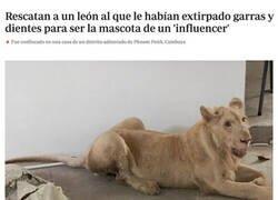 Enlace a Pobre animal...