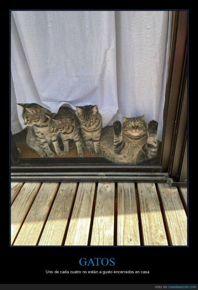 gatos,puerta,salir