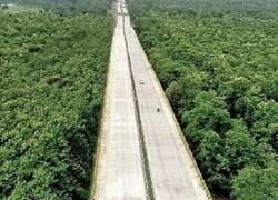Enlace a Una autopista respetuosa con su entorno