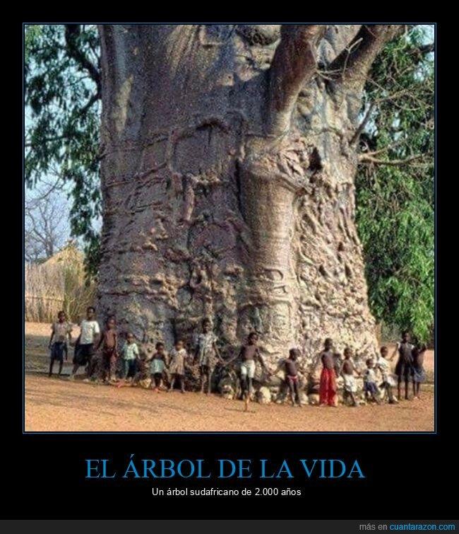 árbol de la vida,edad,sudáfrica