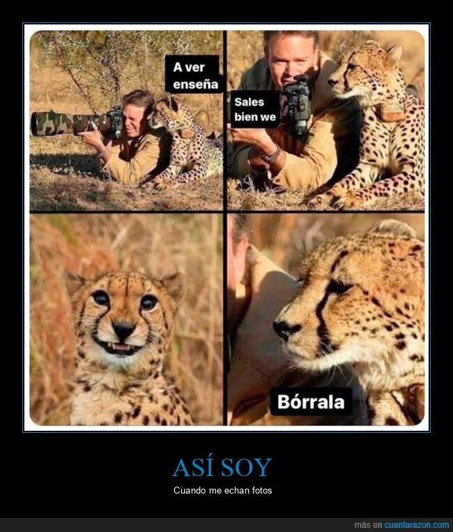 borrar,fotógrafo,guepardo,salir bien