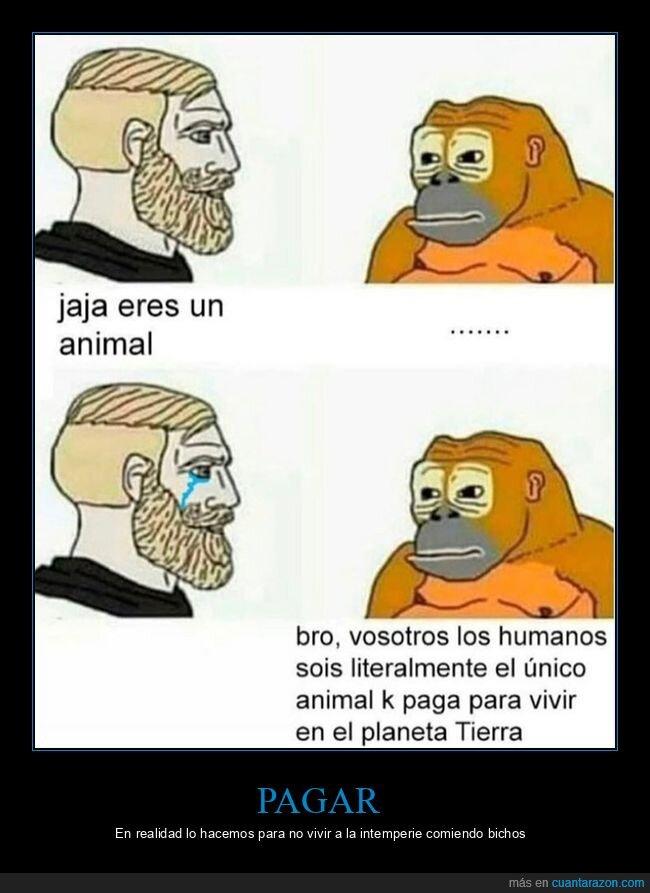 humanos,mono,pagar,vivir