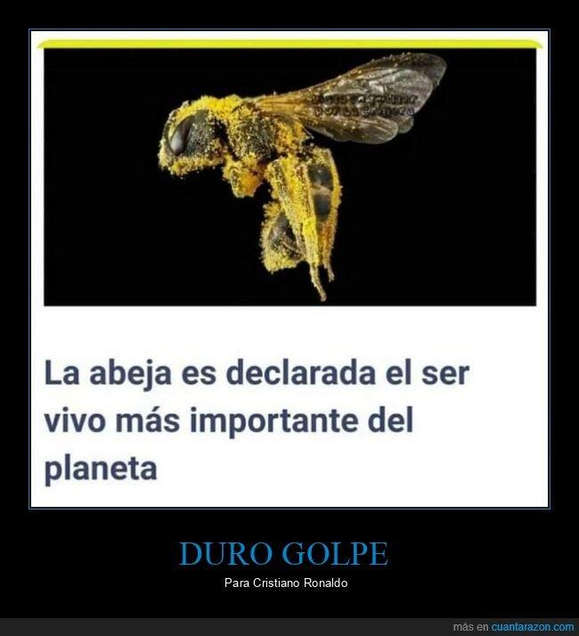 abeja,importante