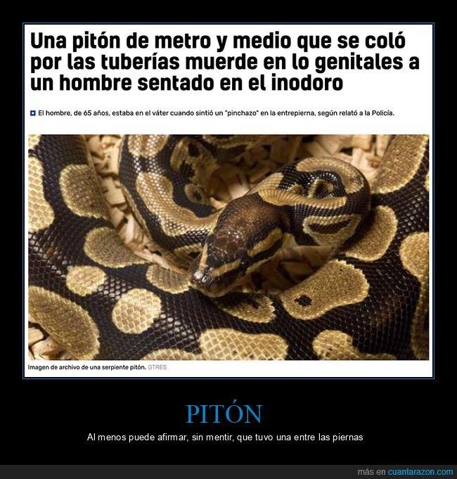 pitón,serpiente,váter,wtf