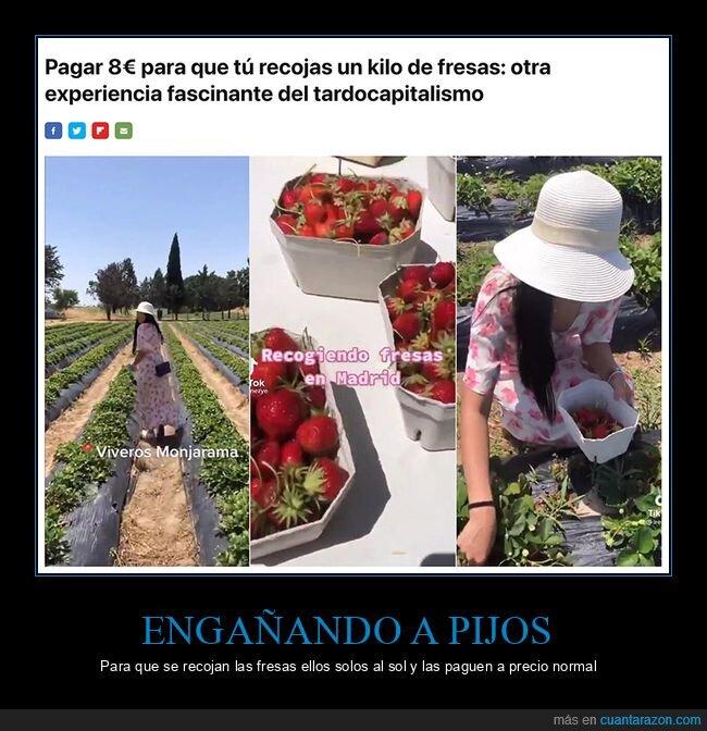 fresas,pagar,recoger,wtf