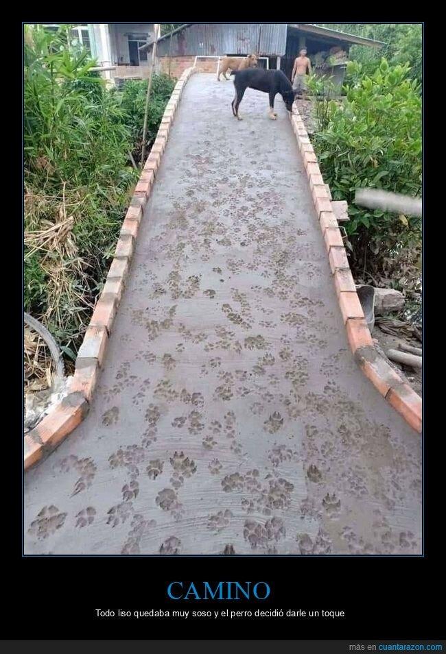 camino,huellas,perro