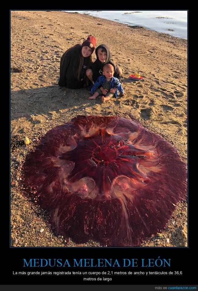 gigante,medusa