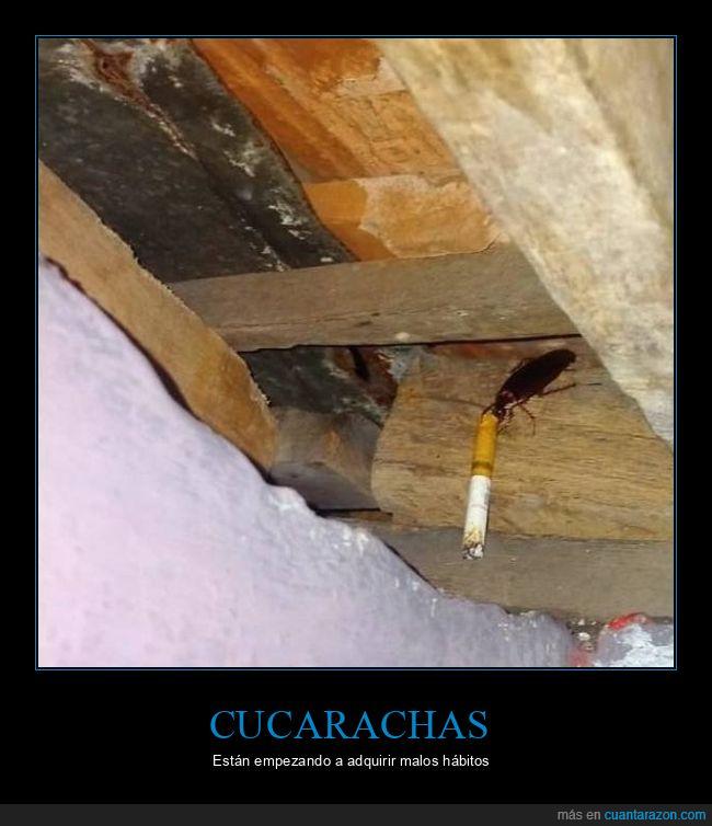 cigarro,cucaracha,wtf