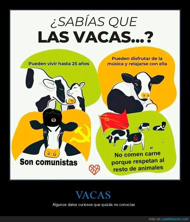 comunistas,vacas