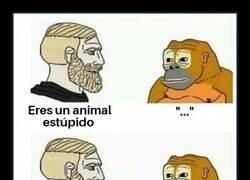 Enlace a Este mono tiene respuestas para todo