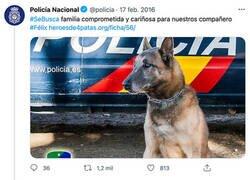 Enlace a Ex perro policía