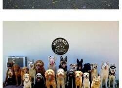 Enlace a Guardería canina ha logrado la hazaña de hacer las fotos más perfectas de grandes manadas de perros