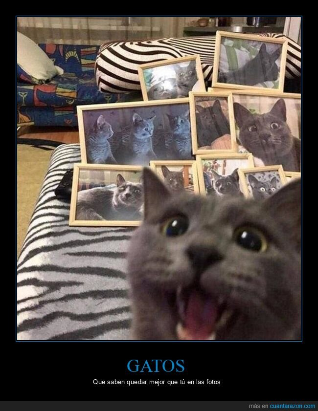 caras,fotos,gato