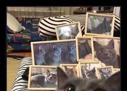 Enlace a Maldito gato fotogénico