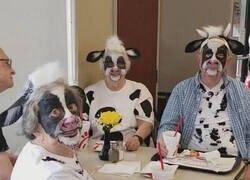 Enlace a La comunidad de la vaca da mucho miedo