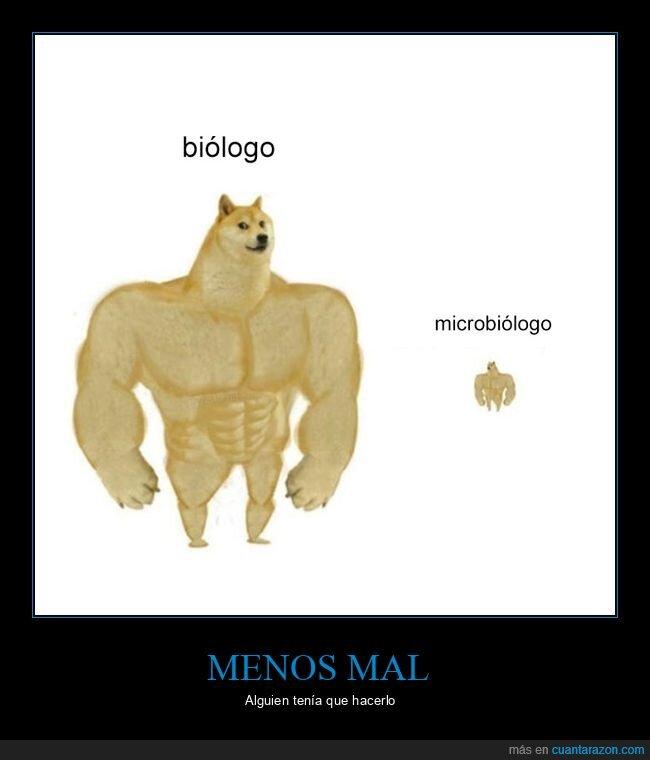biologo,cheems,doge,microbiólogo