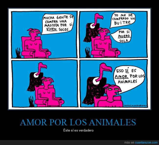 amor,animales,buitre,carroñero,mascotas,morir